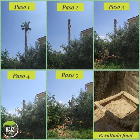 PODAS Y TALAS DE ÁRBOLES Y PALMERAS - foto 9