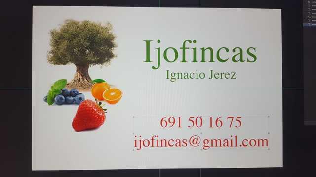 CARTAYA FINCA FRUTOS ROJOS - NARANJOS - foto 1