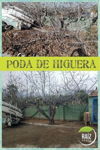 PODA Y TALA DE ÁRBOL Y PALMERA - foto 1