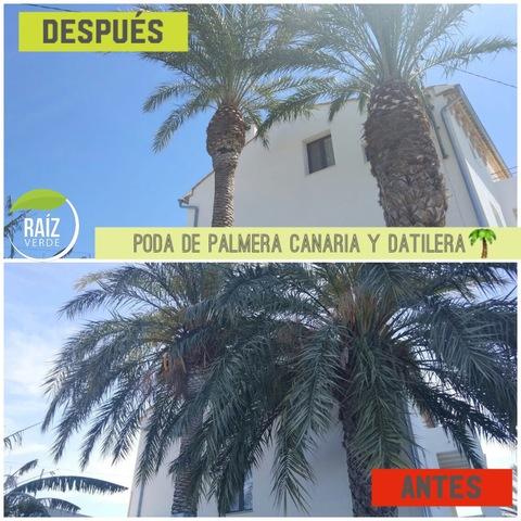 PODA Y TALA DE ÁRBOL Y PALMERA - foto 2