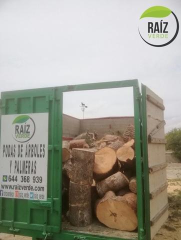 PODA Y TALA DE ÁRBOL Y PALMERA - foto 5