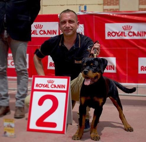 ADIESTRADOR CANINO PROFESIONAL - foto 6
