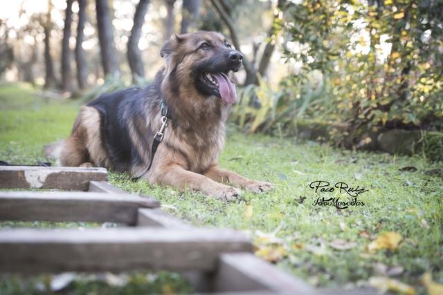 FOTOGRAFÍA DE MASCOTAS - foto 6