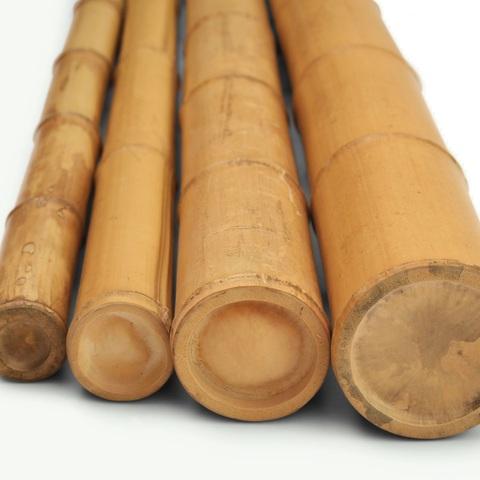 Mil Anuncioscom Bambú Plantas Bambú Venta De Plantas De