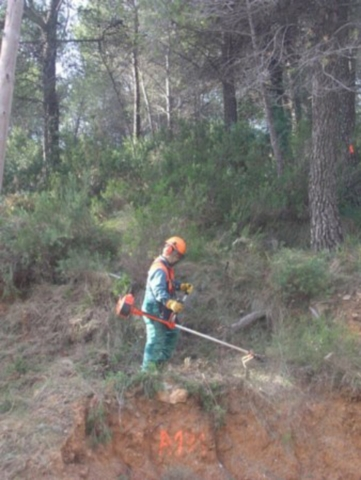LIMPIEZA DE TERRENOS Y PARCELAS - foto 1