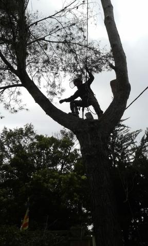 LIMPIEZA DE TERRENOS Y PARCELAS - foto 3