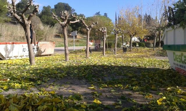 LIMPIEZA DE TERRENOS Y PARCELAS - foto 4