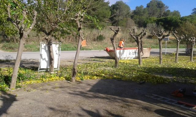 LIMPIEZA DE TERRENOS Y PARCELAS - foto 6