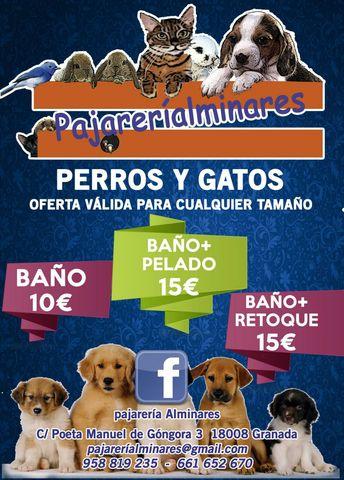 3e55fd54a76b Servicios para perros peluqueria canina en Granada. Venta de servicios para  perros de segunda mano peluqueria canina en Granada. servicios para perros  de ...
