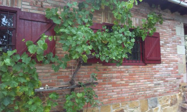 PEDRAJAS.  CARRETERA SORIA-EL ROYO,  KM.  2 - foto 5