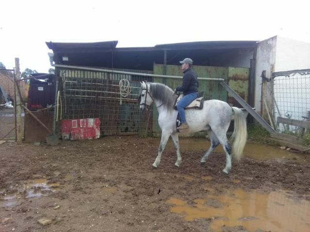fa54cf65f02a Venta de monturas de caballo de segunda mano . monturas de caballo de  ocasión a los mejores precios.