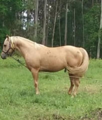 MIL ANUNCIOS.COM - Cuarto milla. Compra venta de caballos ...