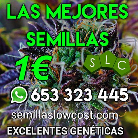 PRECIO INMEJORABLE SEMILLAS DE CANNABIS - foto 1