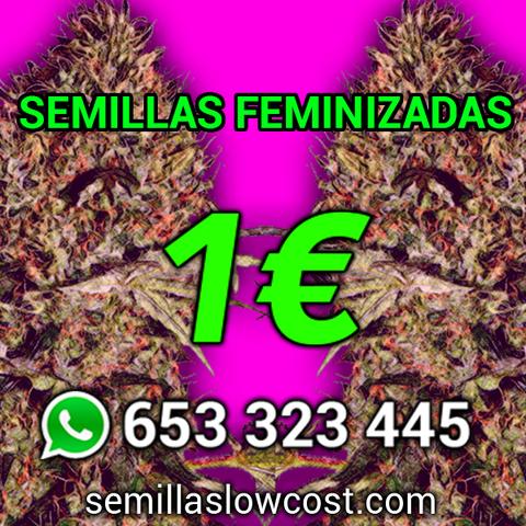 LAS SEMILLAS DE MARIHUANA MÁS CONOCIDAS - foto 1