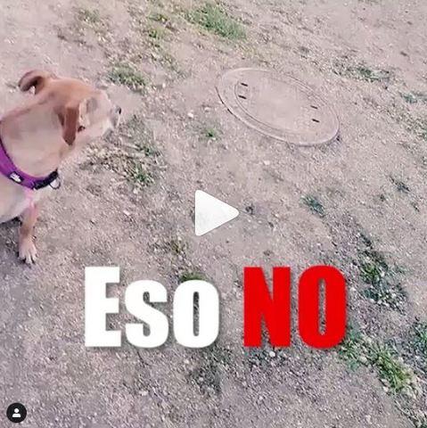 SABÍAS QUE A TU PERRO NO LE GUSTAN. . .  - foto 4