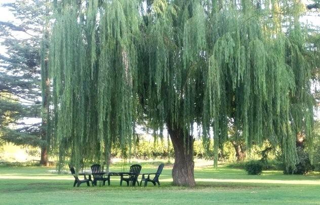 El árbol de Violetta. - Página 3 309475332_1.jpg?VersionId=Y9LsMK