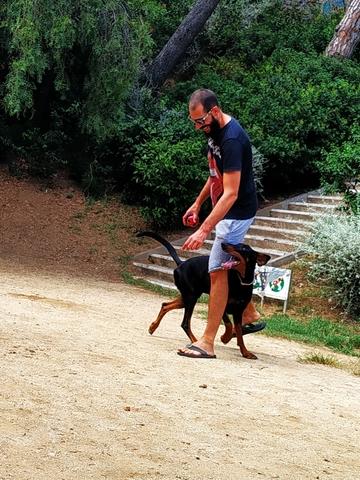 PASEADOR,  CUIDADOR Y ADIESTRADOR CANINO - foto 2