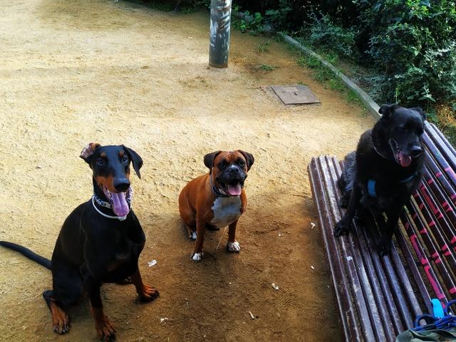 PASEADOR,  CUIDADOR Y ADIESTRADOR CANINO - foto 9