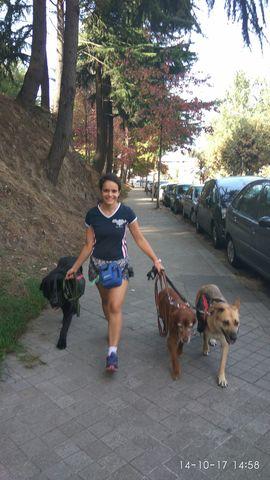 Paseo De Perros Y Otros