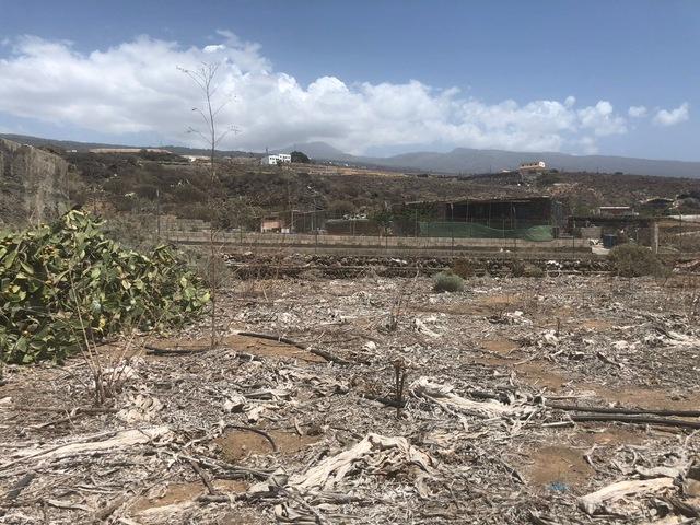 FINCA CON 3 CASAS EN GUIA DE ISORA - foto 1