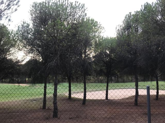ALJARAQUE - foto 2