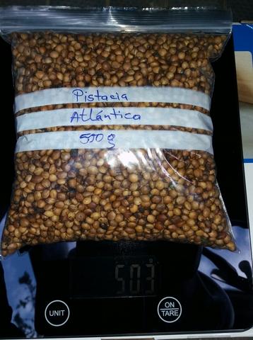 Cornicabra 500 Seeds Pistacia Terebinthus