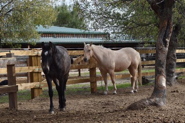 QUARTER HORSE - foto 1