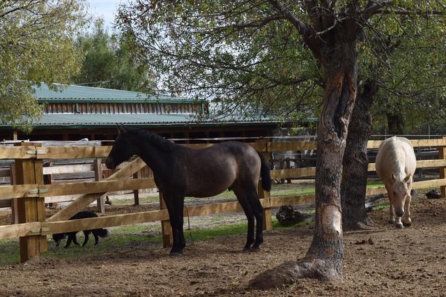 QUARTER HORSE - foto 2