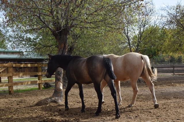 QUARTER HORSE - foto 3