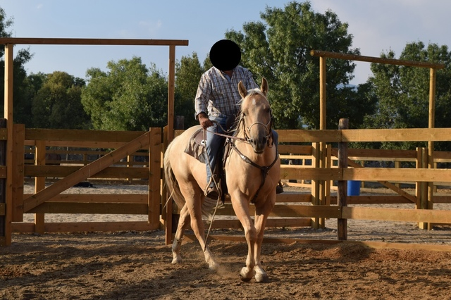 QUARTER HORSE - foto 6
