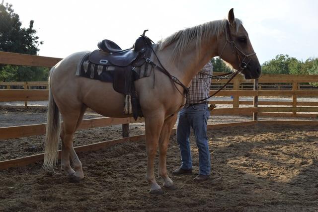 QUARTER HORSE - foto 5