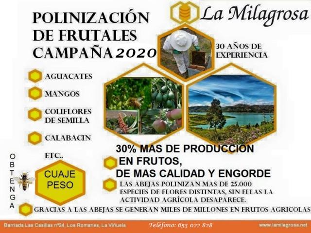 POLINIZACIÓN DE FRUTALES,  MANGOS,  ETC - foto 1