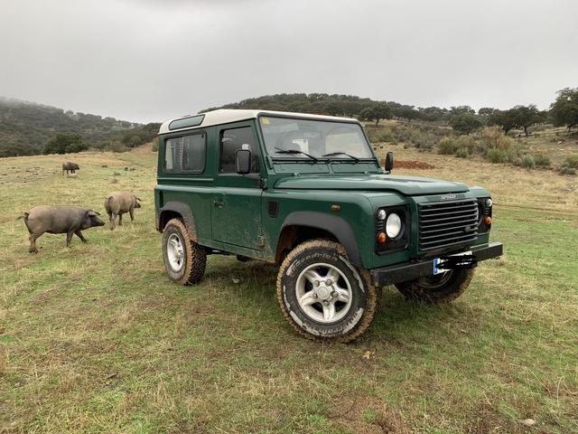 Original Nueva Land Rover Trasero Insignia Defender 90 100 L 316 de Freelander 1 L 315 de gama