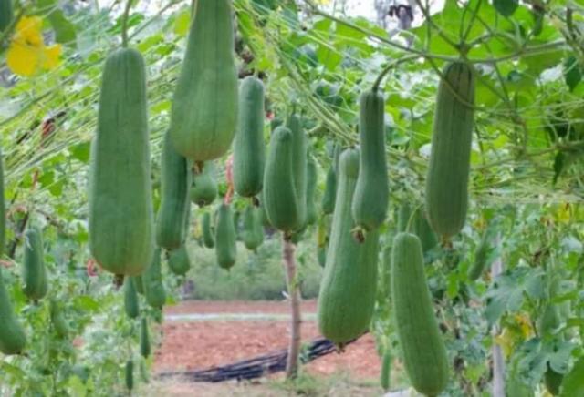 Mil Anuncios Com Semillas Esponja Vegetal Segunda Mano Y Anuncios Clasificados