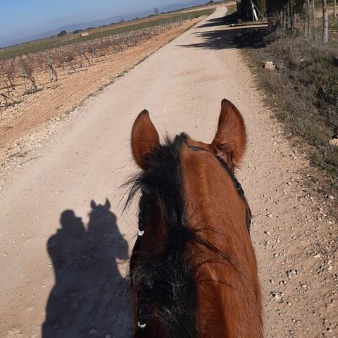 dolor de ingle y caballo