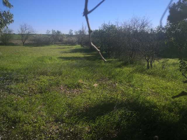 REF. 12464 SANTICHE CHICO (LOS MURGAÑOS) - foto 5