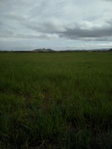 CAMINO CARRIL - foto 2
