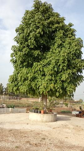 SANGONERA LA SECA - foto 2