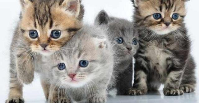 Recogida de gatos en sevilla