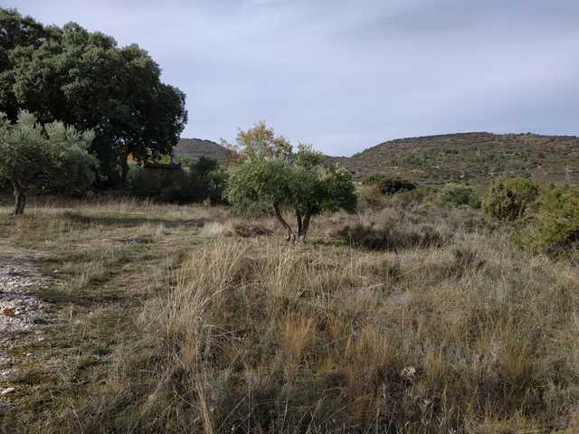 FINCA DE 8000M CON LUZ Y AGUA - foto 7