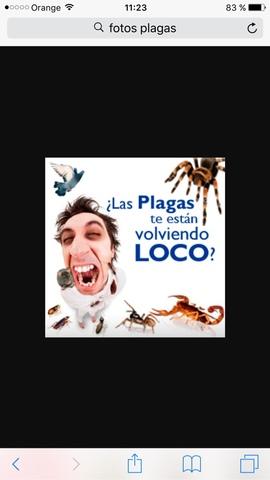 CONTROL DE PLAGAS -FUMIGACIÓNES - foto 3