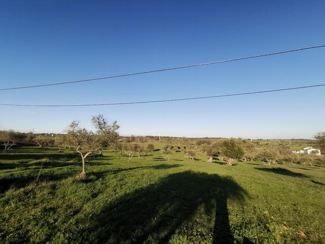 SE VENDE TERRENO (BAJADA DE PRECIO).  - foto 4