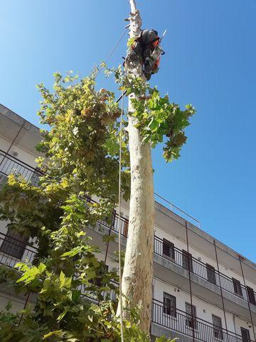 LIMPIEZA DE PARCELAS JARDINERIA Y FOREST - foto 2