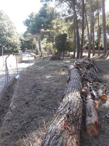 LIMPIEZA DE PARCELAS JARDINERIA Y FOREST - foto 4
