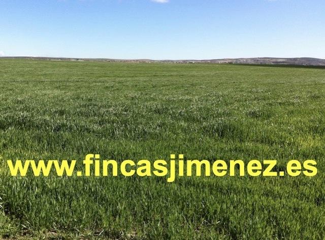 FINCA MIXTA CON REGADÍO,  SECANO Y MONTE - foto 1