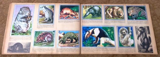 ALBUM ANIMALES Y MINERALES COMPLETO - foto 7
