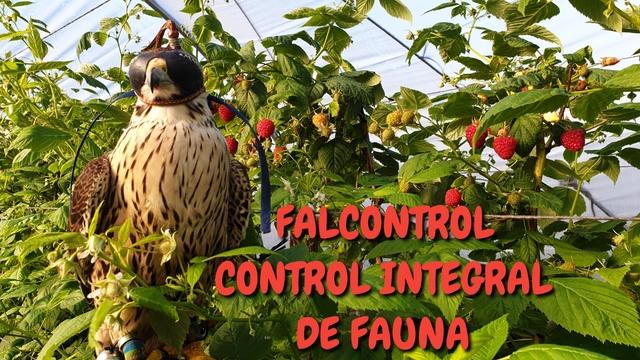 CONTROL DE FAUNA - foto 1