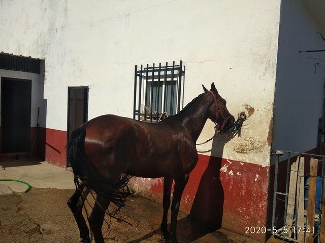 CAMBIO CABALLO POR COCHE - foto 4