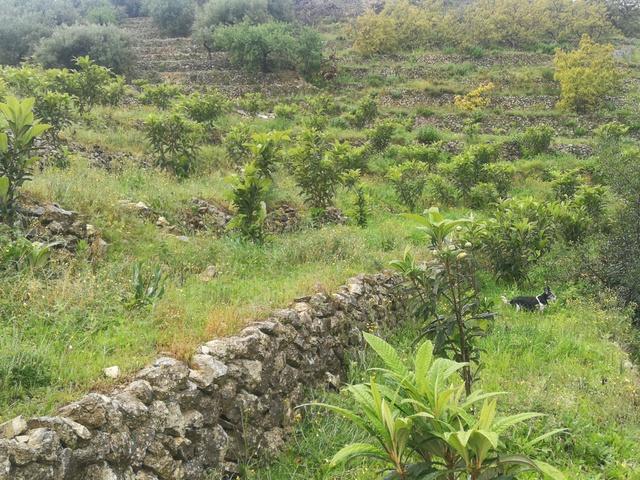 A TAN SOLO 7 K.  L.  DE ALTEA,  15  BENIDOR - foto 3