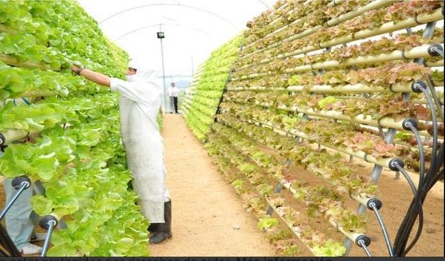 MATRIMONIO DE INGENIEROS AGRONOMOS - foto 2